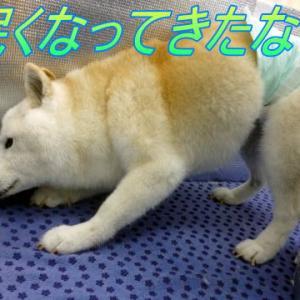 ☆4/6 皆にあって私に無いもの 老犬本舗☆