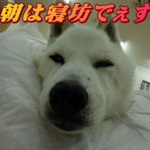 ☆6/12 久々穏やか?な朝 老犬本舗☆