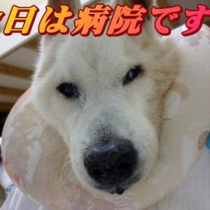 ☆8/3 病院で診てもらおう!老犬本舗☆