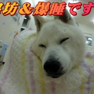☆8/16 暑いですねぇ!老犬本舗☆