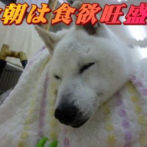 ☆8/20 悲しみは深い 老犬本舗☆
