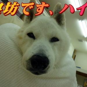 ☆8/23 初七日です 老犬本舗☆