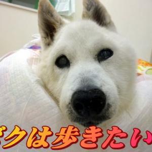 ☆8/29 希望を叶えたい!老犬本舗☆