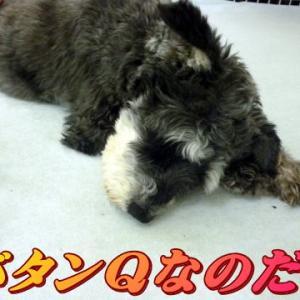 ☆9/13 新たな課題毎日 老犬本舗☆
