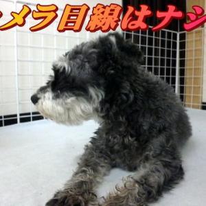 ☆9/15 トリミング室 老犬本舗☆