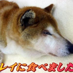 ☆9/29 飲み込み弱い 老犬本舗☆