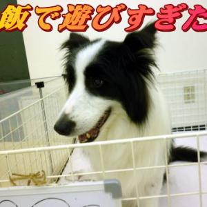 ☆10/20 ネガティブな言葉は・・・老犬本舗☆