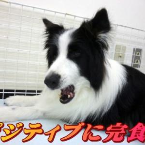 ☆10/21 ポジティブに完食 老犬本舗☆