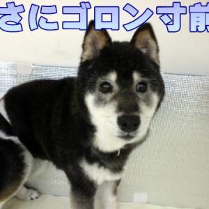 ☆12/4 全頭ご飯完了です!老犬本舗☆