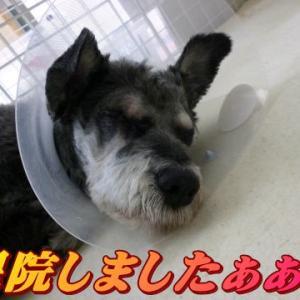 ☆1/25 退院しました!老犬本舗☆