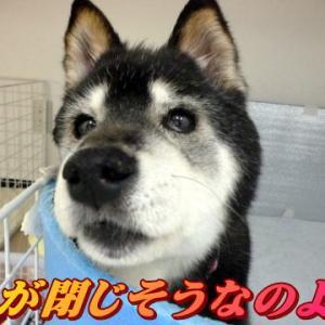 ☆1/26 多飲多尿 老犬本舗☆