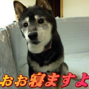 ☆1/28 又しても床擦れ・・・老犬本舗☆