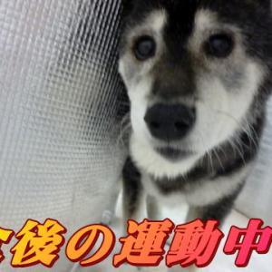 ☆6/18 貴重な晴れ間 老犬本舗☆