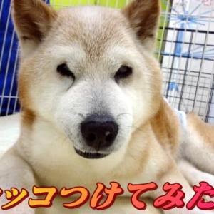 ☆8/3 きくまるくん登場 老犬本舗☆