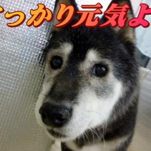 ☆8/5 吐いちゃいました 老犬本舗☆