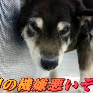 ☆9/25 親知らず大爆発 老犬本舗☆