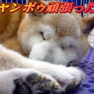 ☆9/27 シャンポゥ祭りでした 老犬本舗☆