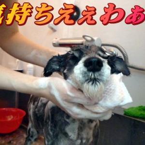 ☆10/25 シャンポゥですっきり!老犬本舗☆