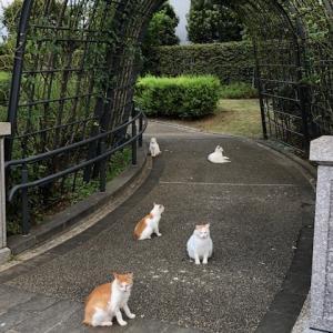 今日の散歩道☆