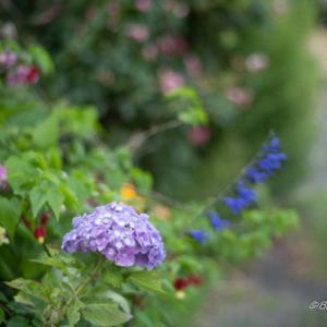 6月の花たち
