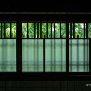 窓の外の緑