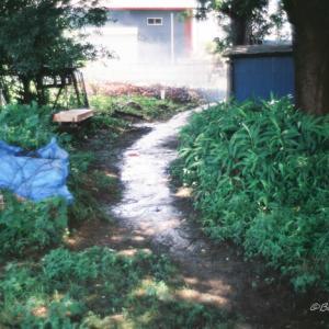 雨上りを散歩(Summilux 35mm 1stでフィルム写真)
