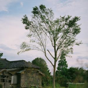 お気に入りの木