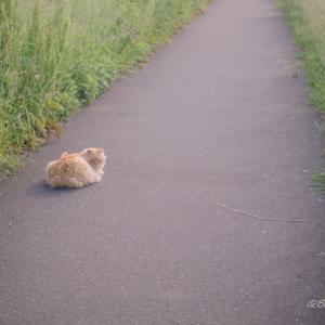 道端のネコ