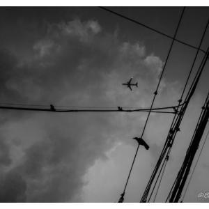 カラスと飛行機