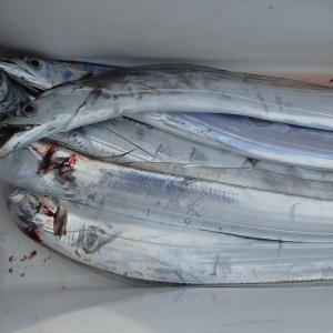 太刀魚の料理