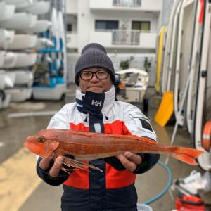 ホウボウ44.0cm(フィッシュダービー2020)昭成丸