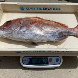 真鯛2785g(フィッシュダービー2021)Tさん