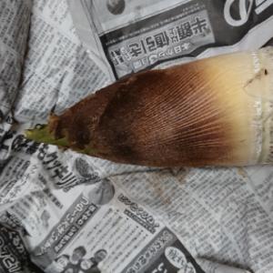 竹の子頂きました。