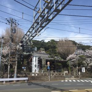 龍口寺と江ノ電と桜。