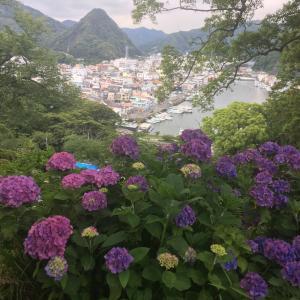 伊豆 下田公園のあじさい祭り。