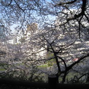 2020年桜の開花予想は出たけれど。