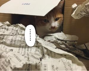 *猫の巣箱*
