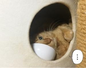 *猫の巣箱その2*