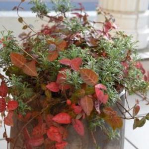 季節は秋!? 10月~11月上旬