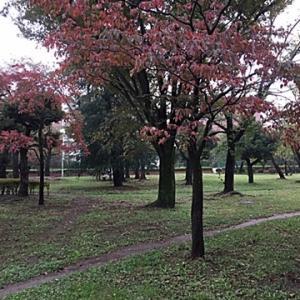 紅葉が始まり見つけたカラスウリの実~♪