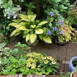 梅雨時期の小さな庭