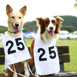 保護犬出身リルサ  エク決勝に奇跡的に出場‼︎