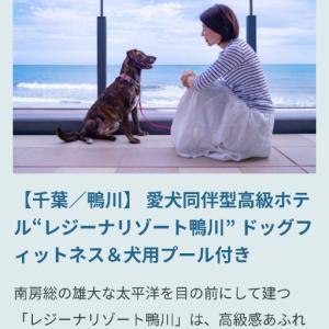 元野犬保護犬が全日空webマガジンモデルに起用されてます