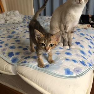 病気の子猫の経過報告ブログを始めました