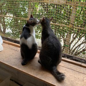 たくさんの猫ちゃんがトライアル決定!