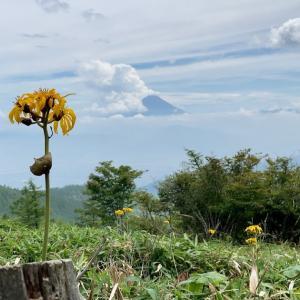 山の日に予定外の南ア:「甘利山」花の彷徨へ・・