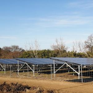 太陽光発電 草刈りウイークエンド 意外な発見