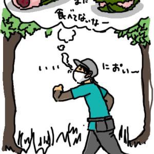 桜餅の匂いがする