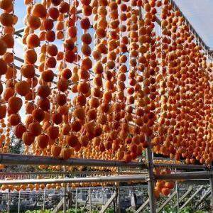 枯露柿のカーテン