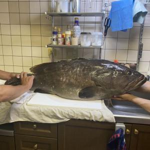 幻の魚ウルトラ絶品❤️